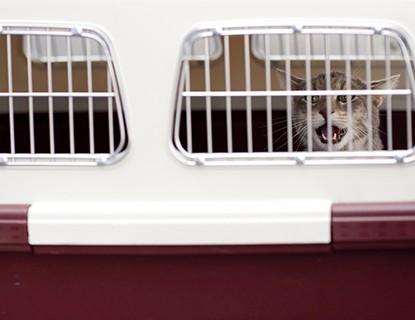 Cómo limpiar el transportín de nuestra mascota