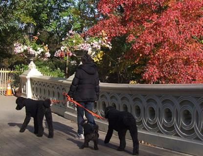 De paseo con tu mascota